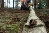 uitdunnen-bos-goirle