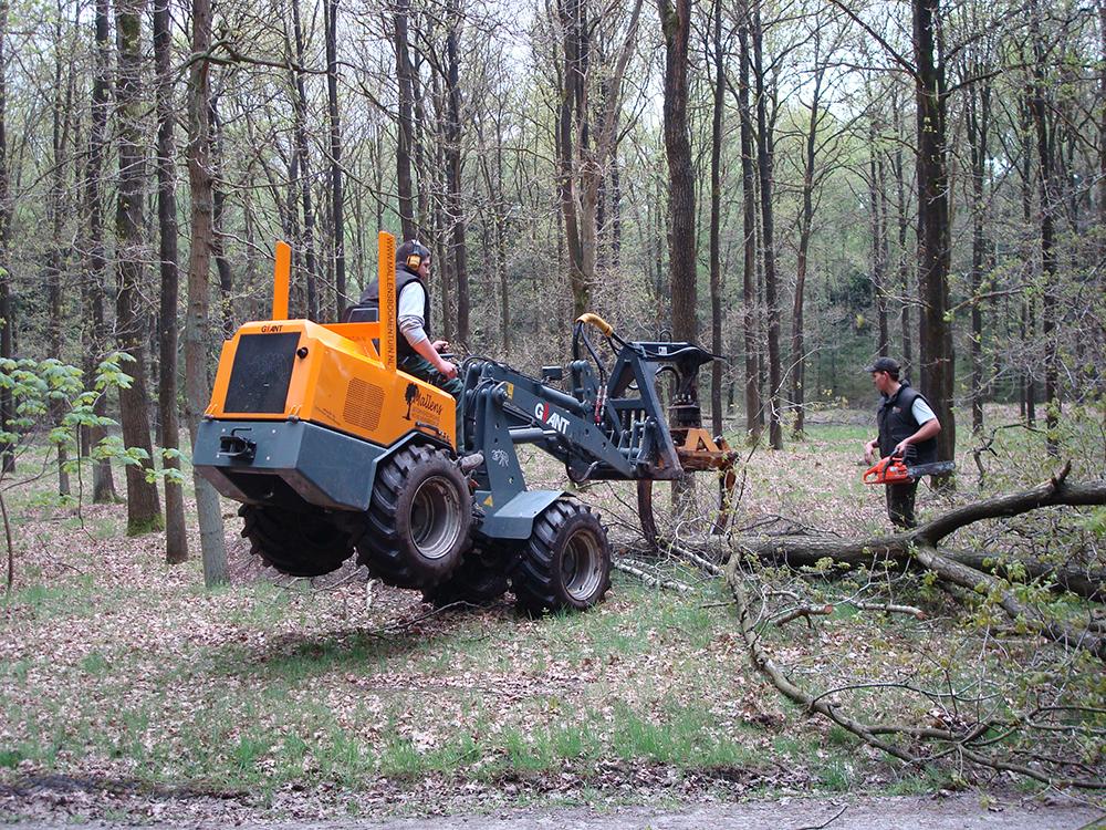uitdunnen-bos-goirle-05